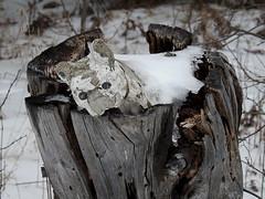 A weathered concrete bulldog atop a tree stump in Pakenham, Ontario