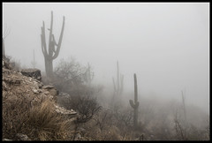 Coronado National Forest #9 2018; In the Clouds