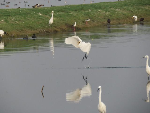 Wadhwana Bird Sanctuary
