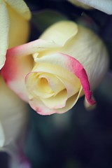 Pink Edge