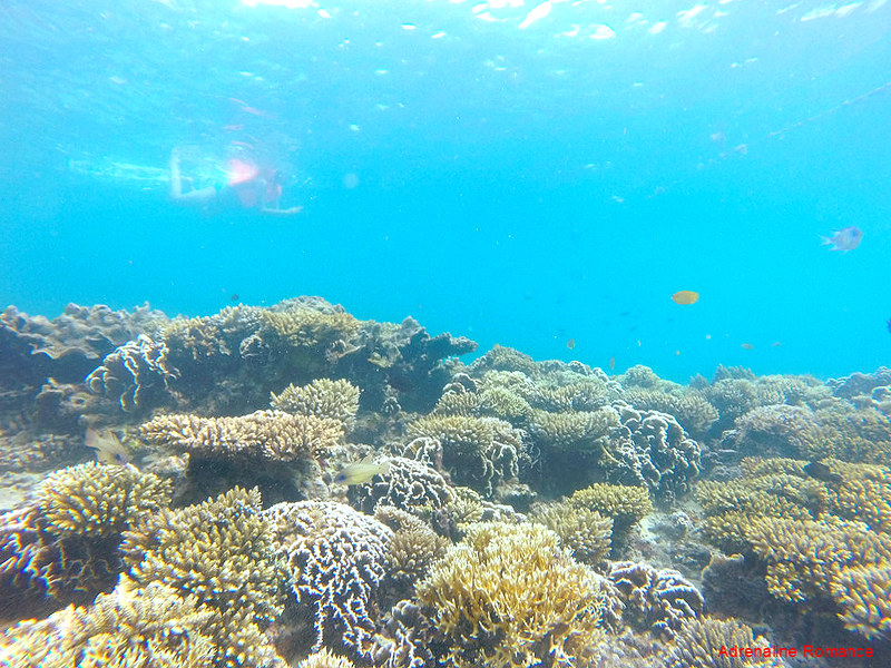 Healthy Corals in Antonia Island Resort