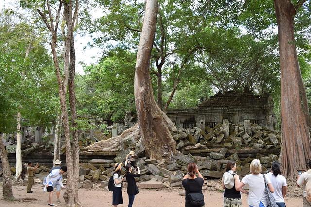 こんなに巨大な木が遺跡からニョキニョキ生えている