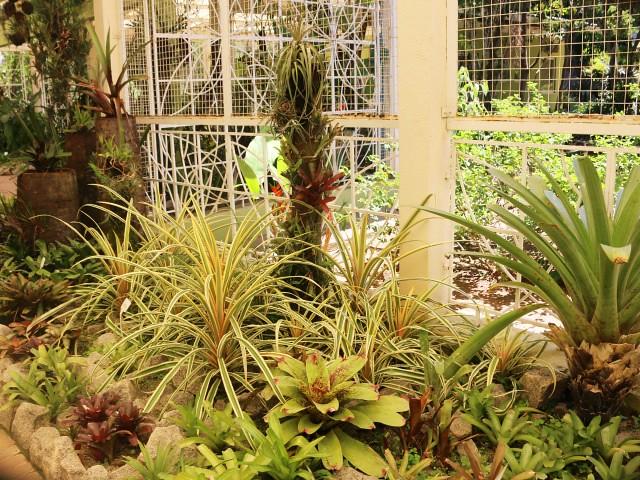 jardim botanico 3 atractii turistice rio de janeiro