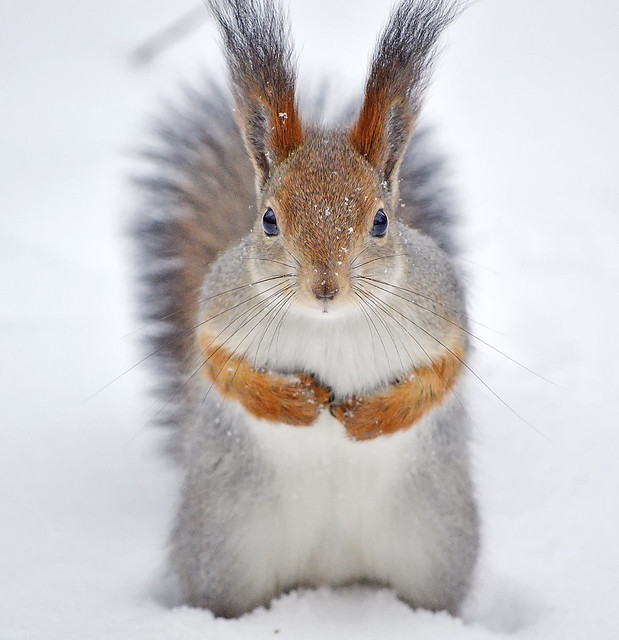 - Hey! Where is my nuts??? (Hungry SnowBaby ⛄ waiting for nuts)