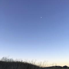 Carmel Meadows/sunrise