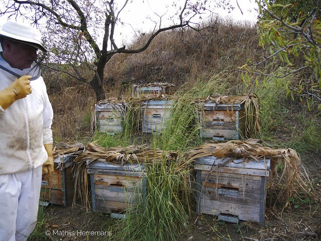 VIDEO: Hoe leven de Spaanse honingbijen