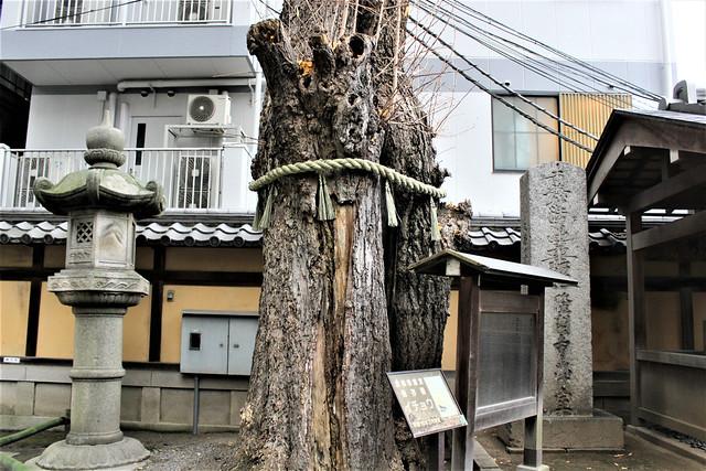 honnouji-gosyuin009