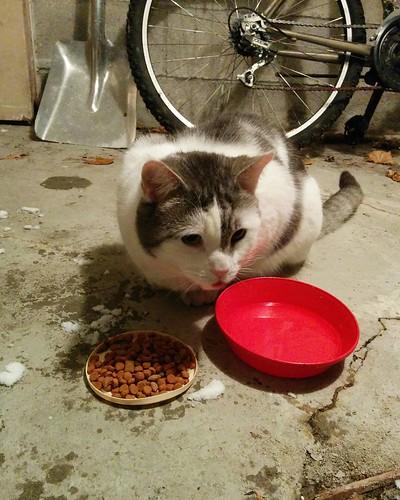 Food and water for the neighbourhood stray #toronto #dovercourtvillage #cats #catsofinstagram #catstagram #caturday