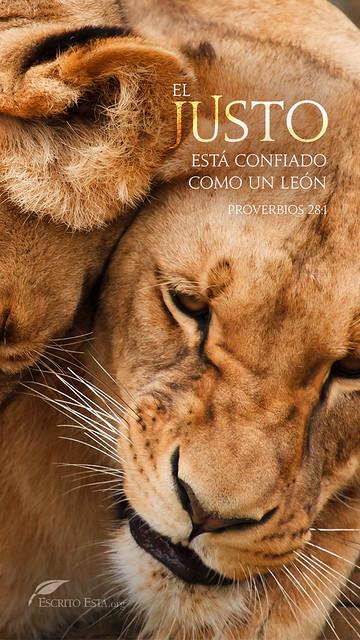 El justo está confiado como un león