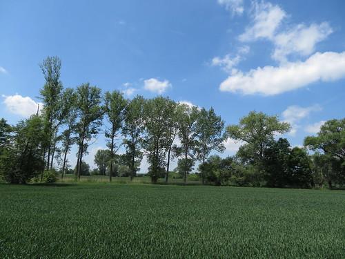 20170601 05 180 Regia Wolken Bäume Feld