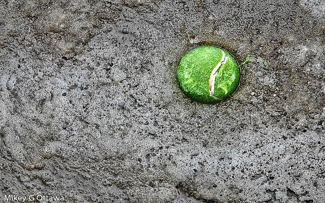Tennis Ball In Ice - Ottawa 02 18