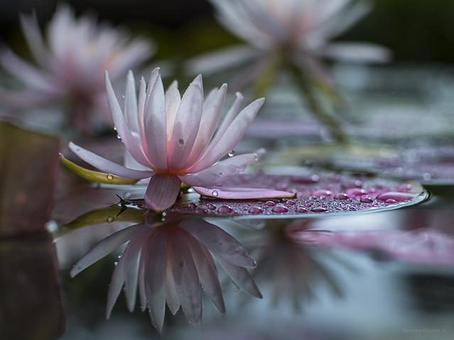 rain at the pond