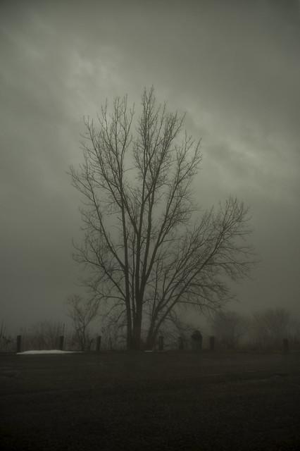 gloom tree