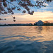 Sunrise at The Jefferson Memorial during the Cherry Blossom Festival