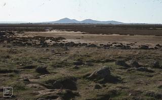 Port Wilson South of Melbourne. Orange-bellied parrot. Saltmarsh. 1982. You Yang hills, out cropping basalt rocks.