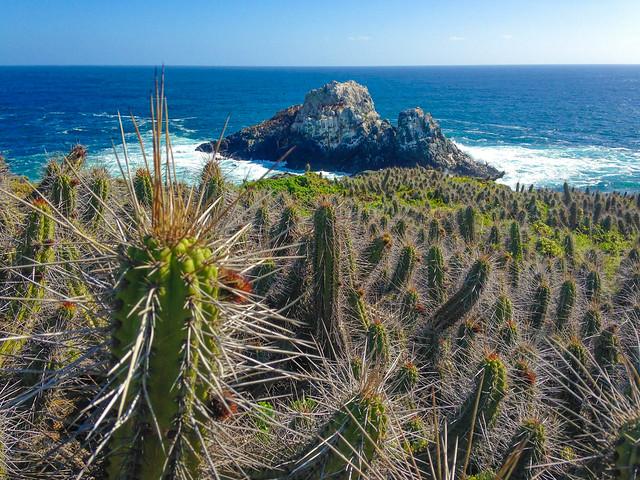 Cactus & Ocean