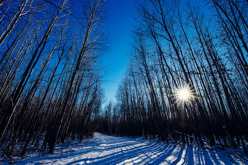 minnesota saintcroixstatepark stcroixstatepark road snow snowtracks sun sunbeam sunset trees winter pinecity unitedstates us