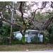 Sarasota by John Lamont1