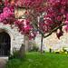 Churchyard @ Detling Kent