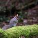 253 of year 4 - Mr. Grey Squirrel