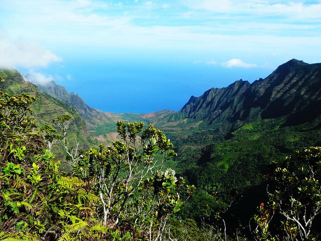 Pihea trail, Kauai, Hawaii