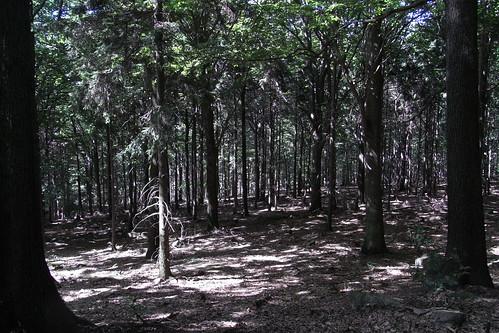 20100821 111 0101 Jakobus Wald Bäume