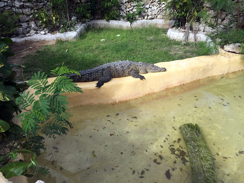 84 - Manati Park - Krodkodil / Crocodile
