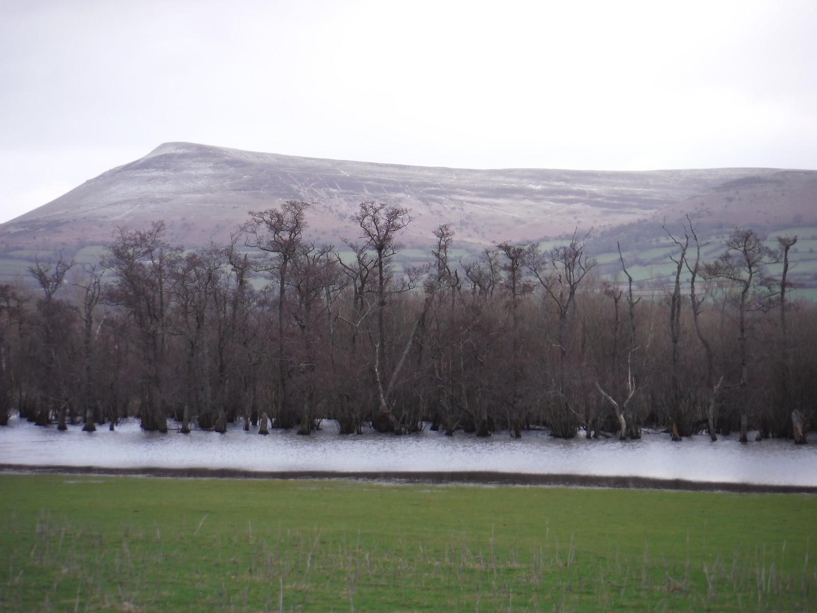 Mynydd Troed and Llangorse Lake SWC Walk 308 - Bwlch Circular (via Mynydd Troed and Llangorse Lake)