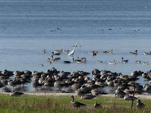 Gülper See - Naturschutzgebiet
