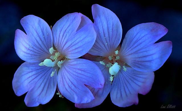 BLUE......BLUE.......MY WORLD IS BLUE
