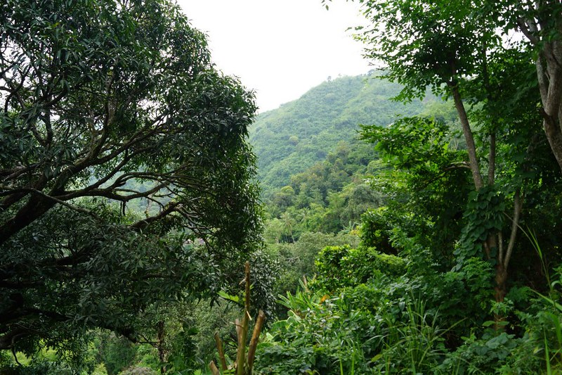 Cebu's verdant mountain