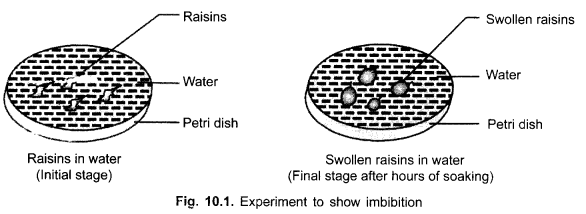 cbse-class-9-science-practical-skills-osmosis-in-raisins-1