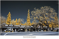 Sequoia, Oak, and Hardware Store, IR