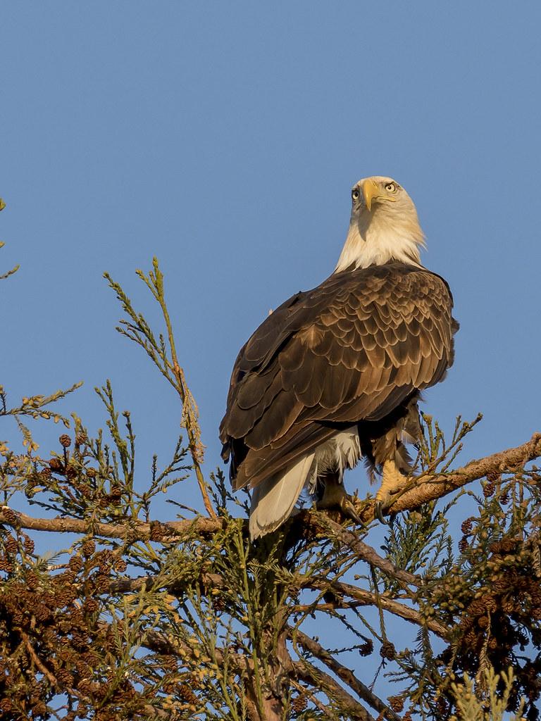 Oiseaux divers [Ajout 2 images 1 mars 2018] 39775168174_d1ea2572bc_b