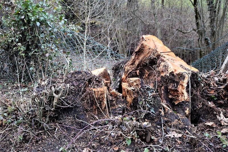 Wood 21.01 (2)