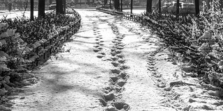 leaving footprints in the city
