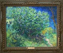 Lillac Bush - Vincent van Gogh