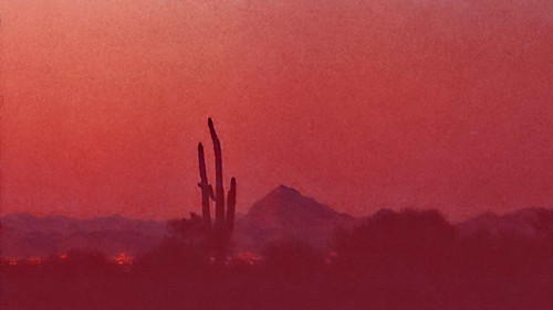 Saguaro at dusk - Ektachrome - 1988