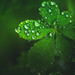 Droplets on leaves by Dhina A