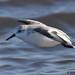 sanderling 2 2018 in flight