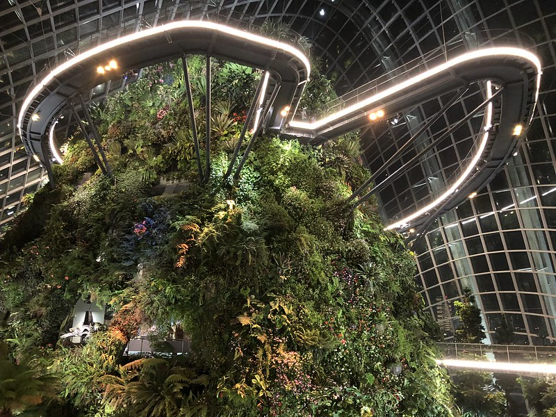 Flower Dome and Cloud Forest   Night Layover in Singapore