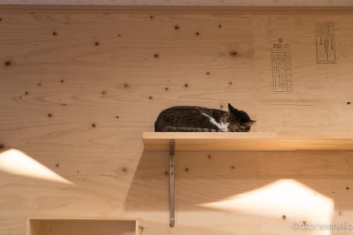 アトリエイエネコ Cat Photographer 25684791838_a239431896 1日1猫! 保護猫とカフェ 夕暮れ時のニャンとぴあ 1日1猫!  里親様募集中 猫 大阪 写真 保護猫 ニャンとぴあ Kitten Cute cat