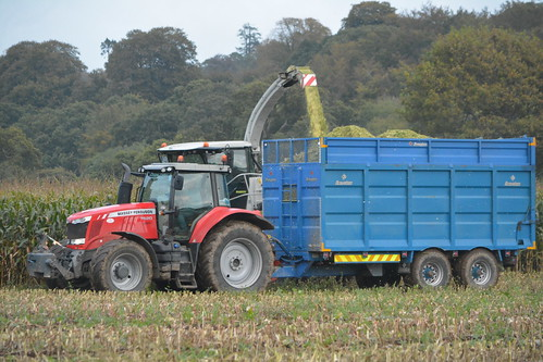 Claas Jaguar 970 SPFH filling a Broughan Engineering Trailer drawn by a Massey Ferguson 7620 Tractor