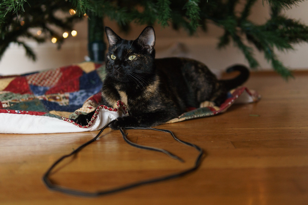 Our cat Trixie sits under the Christmas tree while holding onto a shoestring