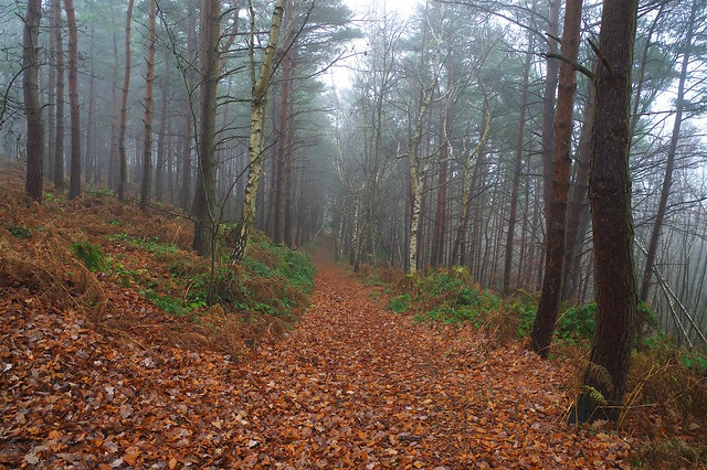 A misty, murky pre-Christmas walk through Perry Woods.