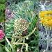 Southwick Beach Flora