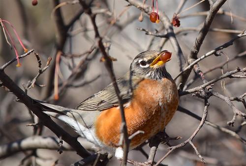 Bird in the berries