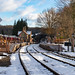Arley in the Snow