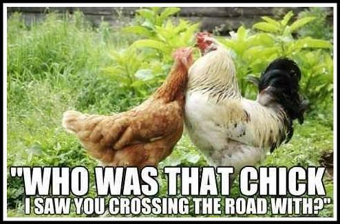 Chicken talk.