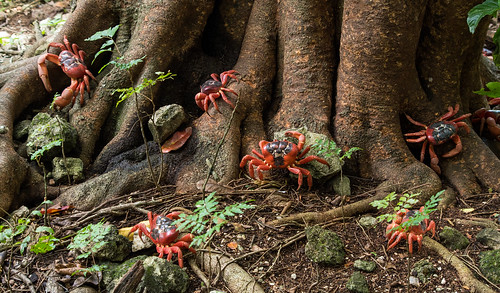 Crabs in the forest